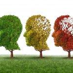 BRAN +CI, los suplementos para beneficiar el cerebro