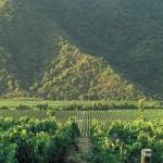 Viñedos Veramonte: Comprometidos con el consumidor y el medio ambiente
